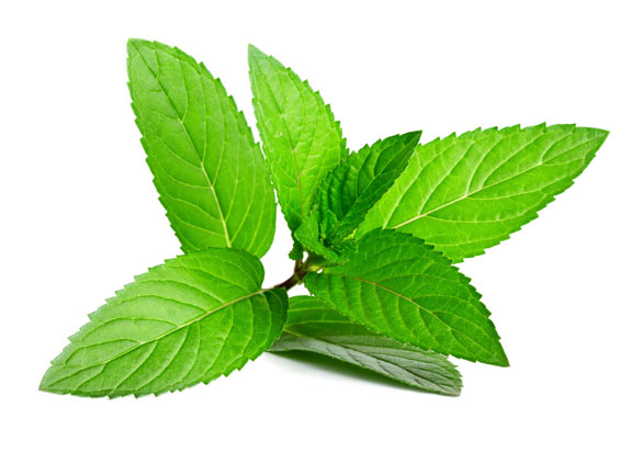 Therapeutic grade peppermint essential oil